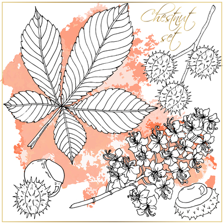 Doodle floral chestnut vector set with doodles black and white coloring page. Vector ethnic pattern can be used for wallpaper, pattern fills, coloring books and pages for kids and adults. Ilustração