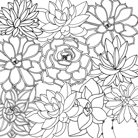 Doodle floral background in vector with doodles black and white coloring page of succulents. Vector ethnic pattern can be used for wallpaper, pattern fills, coloring books and pages for kids and adults.