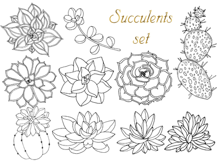 Doodle floral background in vector with doodles black and white coloring page of succulents. Set of tropical plants. Vector ethnic pattern can be used for wallpaper, pattern fills, coloring books and pages for kids and adults.