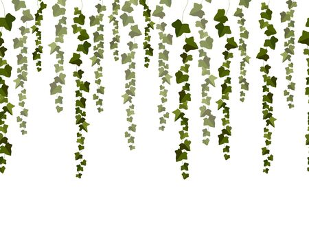 Vector horizontal seamless garland with green ivy leaves on a white background. 矢量图像
