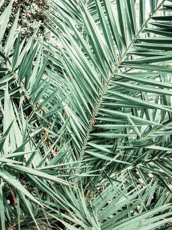 Large palm tropical leaves. Green background bor instastory, blog, post. Minimalism.