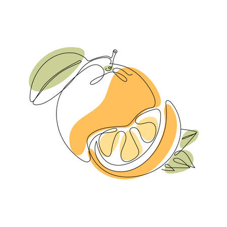 Continuous one line drawing. Orange or citrus fruit. Vector illustration. Minimal abstract art. Black linear art on white background with colorful spots