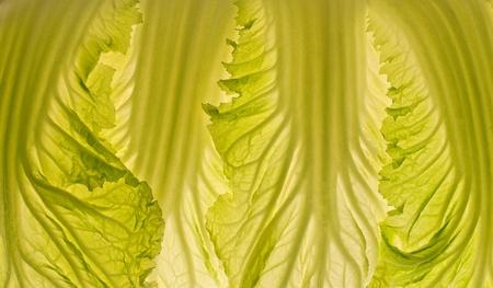 Beautiful cabbage leaf macro lit-thru, creating a vegetable texture beckground. photo