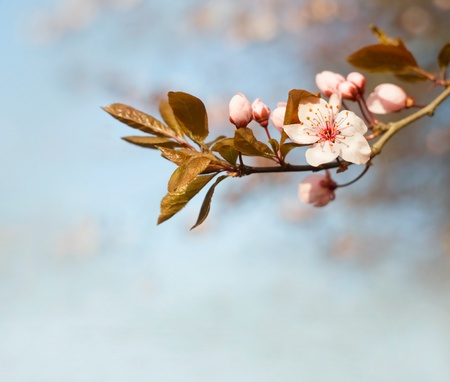 copysapce: Beautiful early spring flowers with copy space.