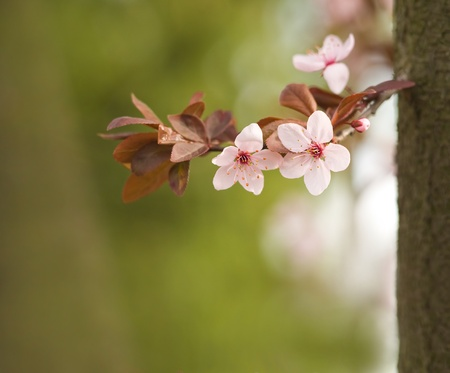copysapce: Beatiful spring flowers in soft light wiht bokeh copy space. Stock Photo