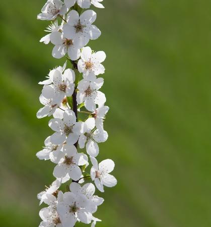 copysapce: Delicate early spring flowers in sunlight wiht bokeh copyspace. Stock Photo