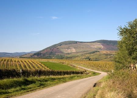 late fall: Vineyards at late fall.