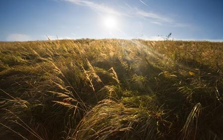 grassfield: Grassfield to infinity
