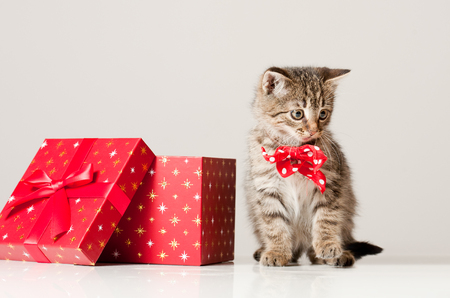 kitten: Shot of playful little kitten with decorative Christmas gift boxes.