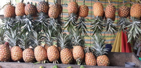 Big pile of pineapples at local Colombian market.
