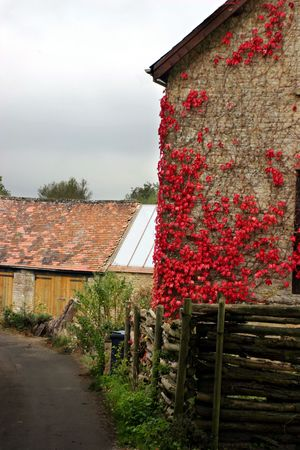 Main house of a farm with a red plant growing on it photo