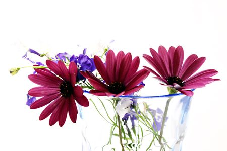 vase color: Flowers in a vase, color, white background Stock Photo