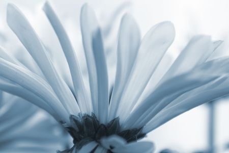 garden key: Daisies14