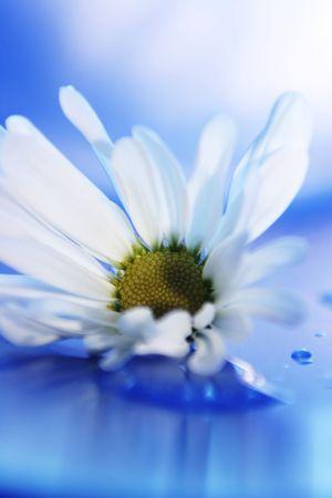 Daisies12