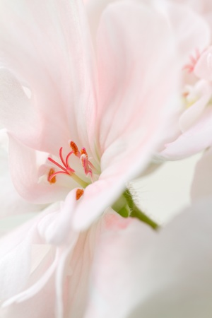 Details of a pink flower in bloom photo