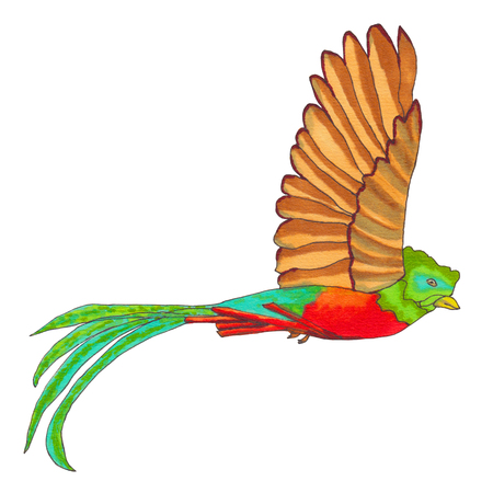 Quetzal Bird flying. Resplendent Quetzal isolated. Hand drawn illustration.