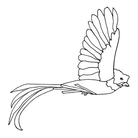 Quetzal Bird flying. Vector resplendent Quetzal. Hand drawn monochrome illustration.