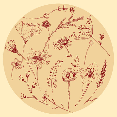 graphic illustration wildflower set for your design Vector