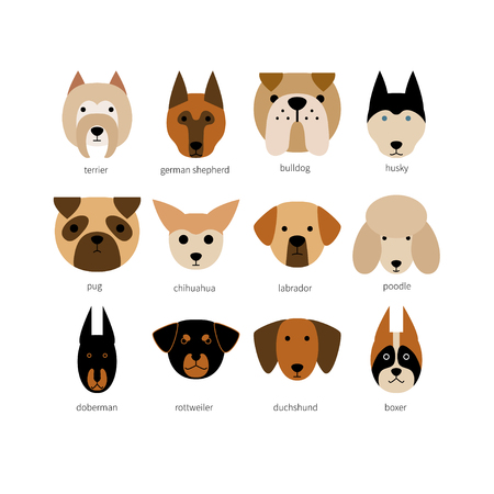 Vector flat dog icon set. Terrier, Labrador, husky, bulldog, rottweiler, poodle, doberman shepherd, chihuahua, boxer, dachshund, pug. Colored isolated icons for polygraphy, web design, logo, app, UI.