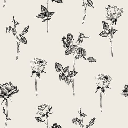 Vector seamless hand drawn pattern with roses in vintage graphic style. Gentle decoration pattern for paper, textile, handmade, wrapping decoration, scrap-booking, polygraphy, t-shirt, cards. Illustration