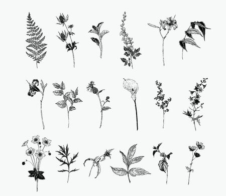 Vintage wild flower illustration set. Isolated black and white botanical herbs and flowers hand drawn graphic. Fern, Lily, Calla, Anemone, Salal, Wisteria, Delphinium Иллюстрация