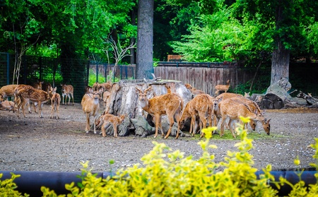 wildness: Deers Stock Photo