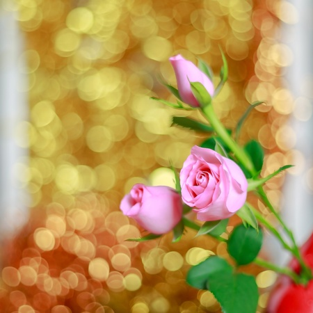 Pink roses on bright golden bokeh background