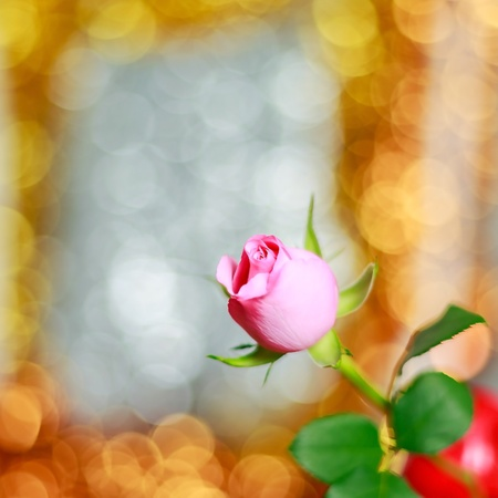 Pink rose on bright golden bokeh background