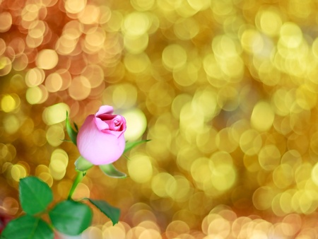 Pink rose on bright golden bokeh background