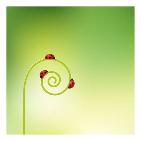 sprout: Ladybugs on sprout unrolling background , vector , illustration
