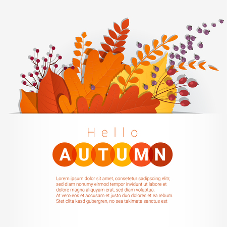 lay: Hello autumn with colorful leaves and fruits background , vector , illustration