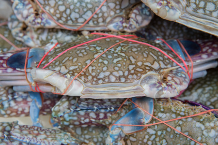blue swimmer crab: fresh blue craps in the ice, sea food in Thailands market Stock Photo