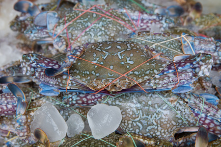 decapod: fresh blue craps in the ice, sea food in Thailands market Stock Photo