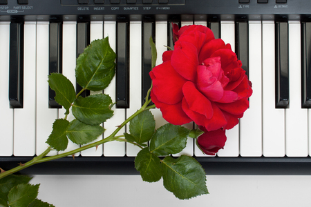 electronic piano: Red rose lying on the keyboard of the electronic piano, the top view. Stock Photo