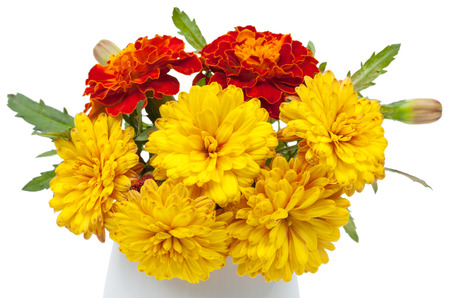 dark red: Dark red marigolds and chrysanthemums in a ceramic vase, flowerpot. Isolated on white background, close-up. Stock Photo