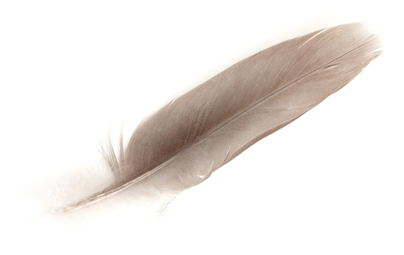 fuzz: Feather dove color, isolated on white background. Close-up. Stock Photo