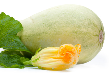 marrow squash: Vegetable marrow squash with flower and green leaves isolated on a white