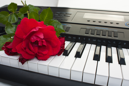 Background of synthesizer keyboard with rose, close-up.