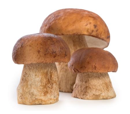 Three boletus edulis mushroom isolated on white background, close up.