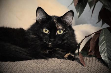 kitty cat: kitty cat posing