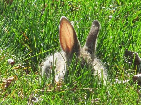 hide and seek: Bunny Hide & Seek