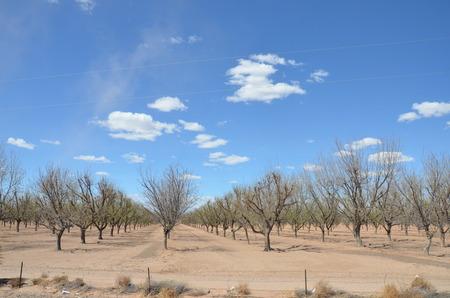 arbres fruitier: arbres fruitiers en hiver Banque d'images