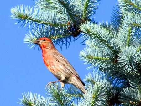 bird feet: bird in tree
