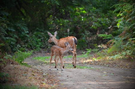 mommy and baby deer