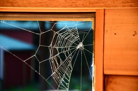 Spider web Banque d'images - 47208802