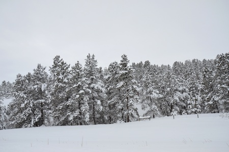 ski lodge: Snowy Trees