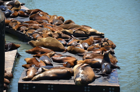 sea lions relaxing on the pier