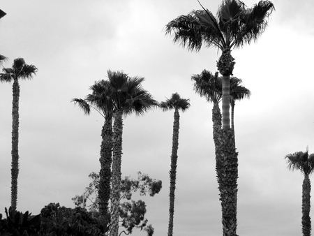 palmbomen Stockfoto