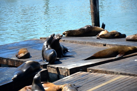 Sea lions lounging on the dock