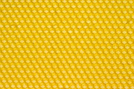 Nid d'abeille jaune pr�par�e pour les abeilles pour commencer la construction des peignes